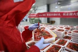 品虾师年薪30万,每天都有龙虾吃的背后,真相令人吃惊!