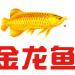 金龙鱼股价腰斩市值蒸发3800亿元